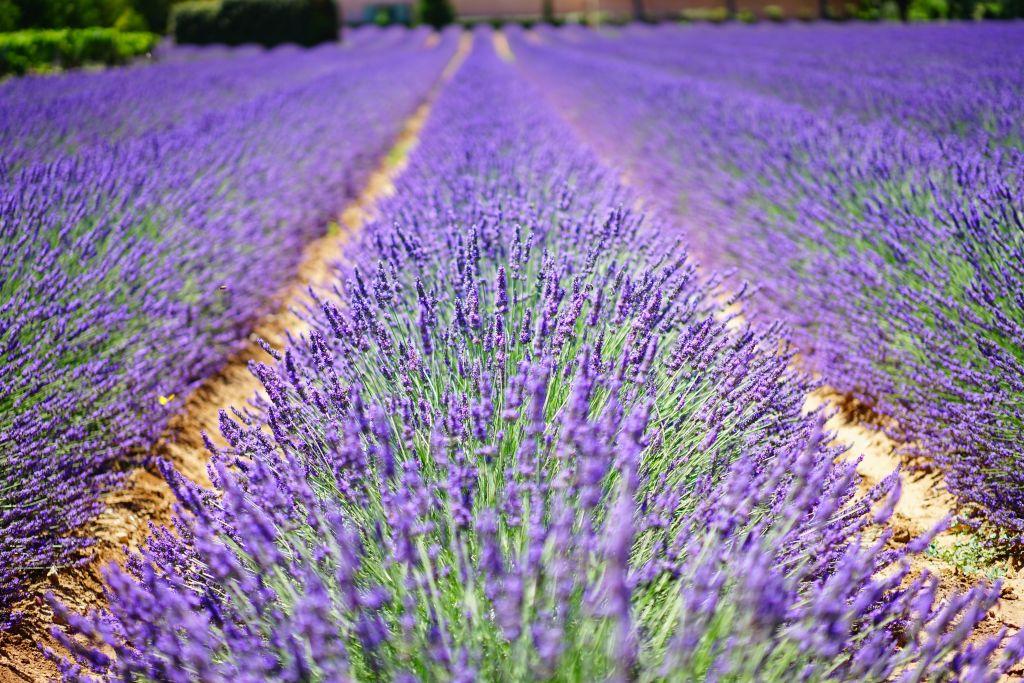 Aix en Provence - Französisch Sprachreise
