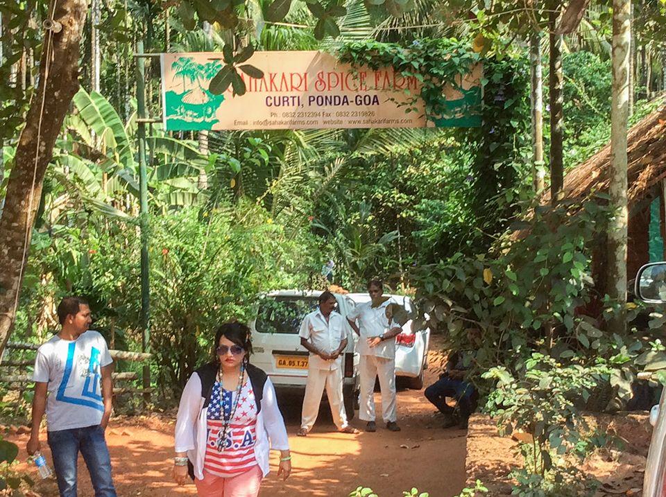 Englischkurse in Goa - Gewürzplantage