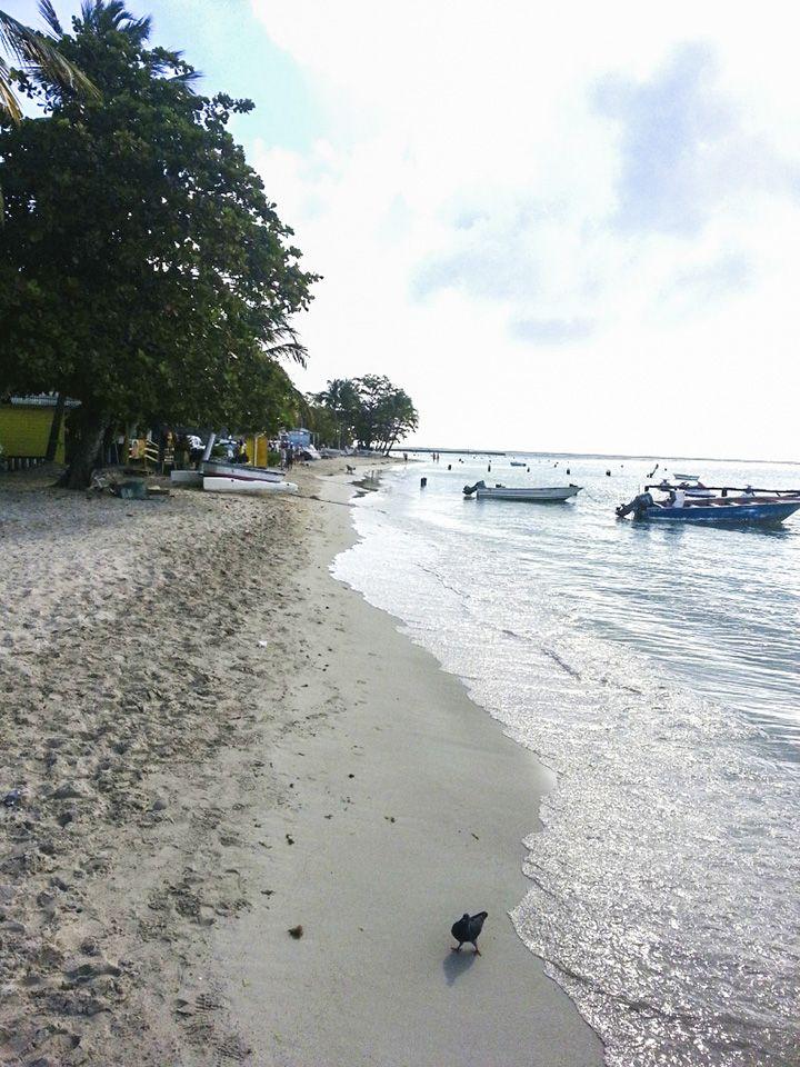 Französisch Sprachreisen Guadeloupe - Strand bei St. Anne