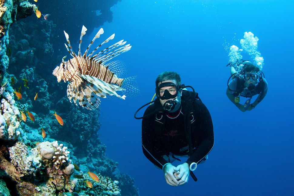 Französisch lernen auf Martinique - Diving