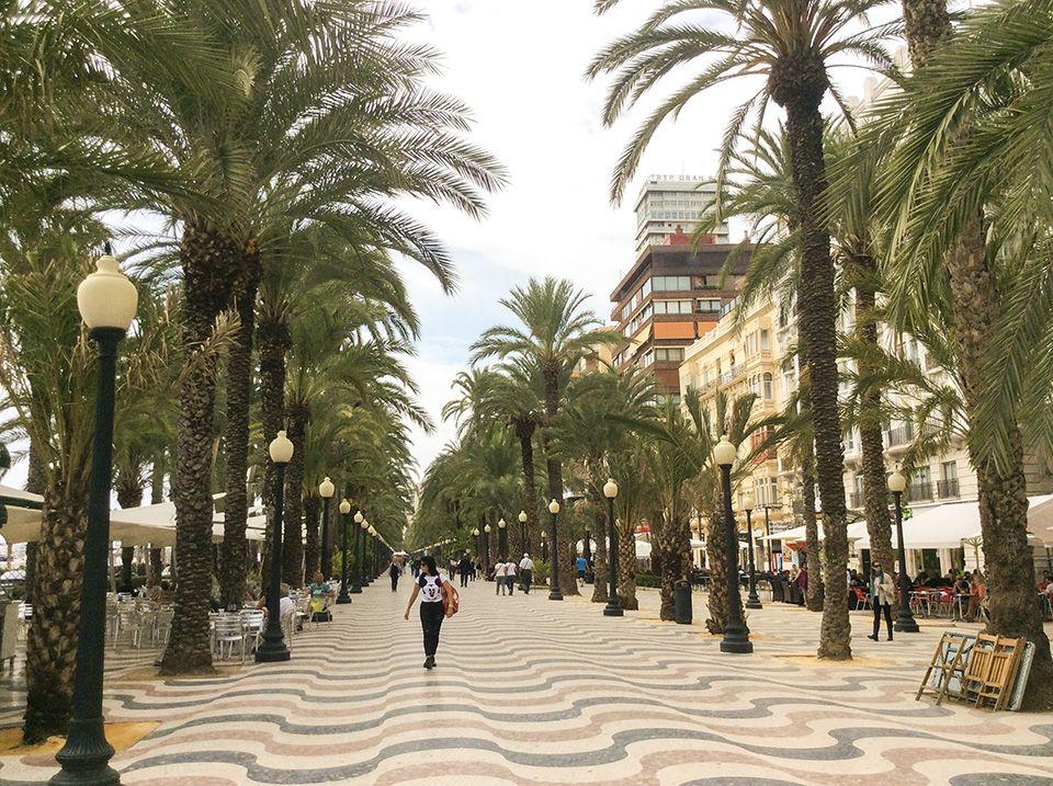 Spanisch lernen in Alicante - Paseo unter Palmen